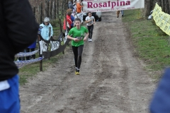 CrossRosalpina_27112016_(5)